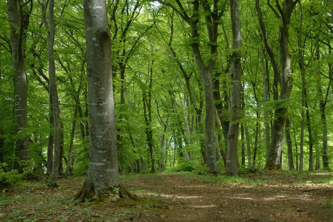 Letzte Ruhe unter Bäumen